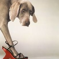 williamwegman - Google Search