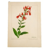 Cardinal Flower Botanical Watercolor R.H. Greeley