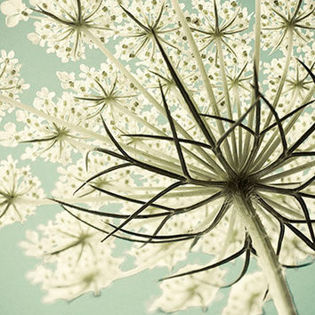 Queen Anne's Lace Photograph, Shabby Chic Pastel Flower Photography, White Turquoise Wall Decor, Nature Photography, Still Life