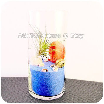 Modern Air Plant Glass Terrarium : Soft Blue Sea Tillandsia Vase For Home Decor Kit (Blue Sea Version)