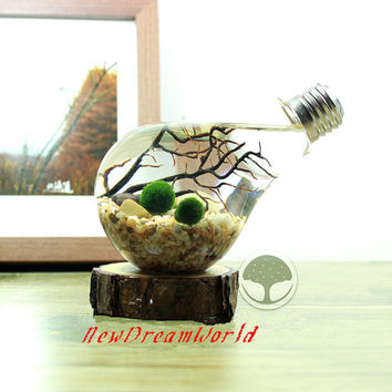 Bulb aquarium with aquatic living marimo ball,river stone,sea fan,tabletop bulb terrarium-office desk decor,unique gifts