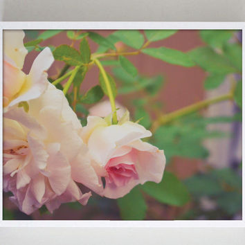 Photography Print Pink Rose Floral Flower Photography Nature Photo Garden Photography Romantic Photography Bathroom Victorian Decor