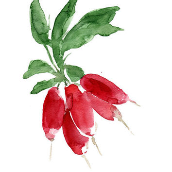 Smal Radish bouquet, original watercolor painting, green,Ruby Red, wall decor,vegetable art, botanical study, farmers market,  minimalist
