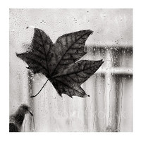 Wall decor - Black and White Photography - Rain photography bird autumn photography Emotional photography Sadness art 12X12 inch