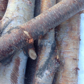 Large White Birch Logs, Rustic logs, Home Decor, Alaska birch log, Rustic home decor, Bundle of 6 logs