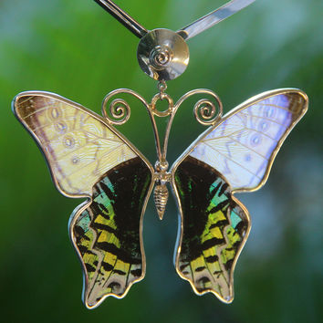 Love Butterfly Litmus. Handmade with natural butterfly wings, big pendant.