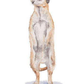 Meerkat Watercolor