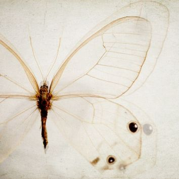 Butterfly Print, White Insect Wings, Nature Photography, Minimal Winter White Cream Beige Wall Decor - A Kind of Hush