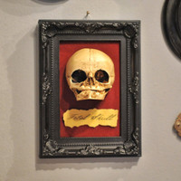 Cabinet of Wonder - Fetal Skull display replica  - Victorian Oddities wall decor