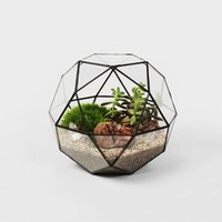 The Future Perfect - Icosidode Terrarium - Objects