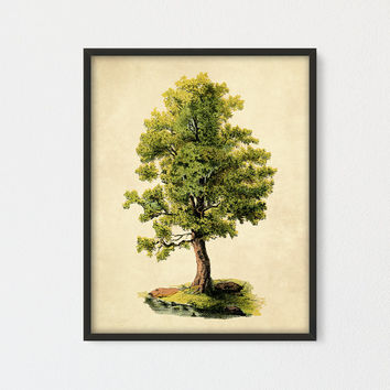 Oak Tree Printable Art, Natural History Green Tree And Lake Art, Tree Poster, Encyclopedia Book Plate, Farmhouse Decor, Cottage Wall Art