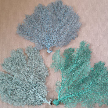 Sea Fan Coral, Sea Fan, Beach Decor, Sea Fan, Coastal Decor, Nautical Decor, Beach Wedding Decor. Sea Fans Aqua, Turquoise, Blue