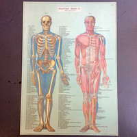 Anatomy Series IV Print