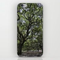 White Point Gardens iPhone & iPod Skin by Mary Andrews