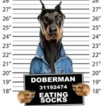 cool doberman eating socks t-shirt mens t-shirts dogs mugshot t-shirts mug short dog pets tshirt pet lovers