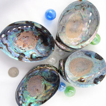 Beach Decor  Paua Polished Abalone Seashell - Nautical Colorful Abalone Shell, 4-5.5in, 1PC