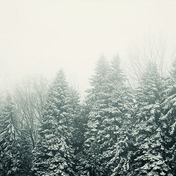 Ever Green - Pine Trees in Fog, Landscape Photography, Snow, Mist, Winter Photography, Forest, Nature, Christmas Wall Decor