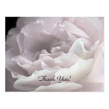 Thank You Postcard, Pale Pink Rose Postcard