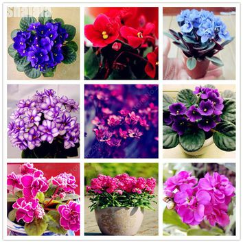 20pcs Colorful Violet Flower Seeds, African Beautiful Violet Seeds Garden Potted Plants Seed Perennial Flower