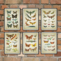 Set of 6 Prints Get 3 Colors Background Butterflies Antique Art Print, Вutterflies art, bedroom, housewarming gift, colorful, insects *6.2*