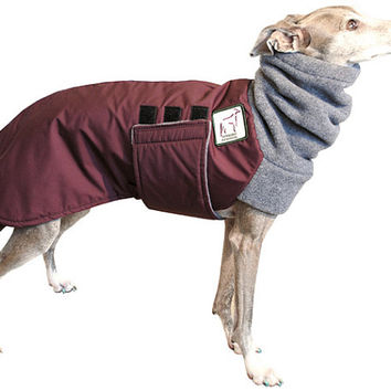 ITALIAN GREYHOUND Cold Climate Special