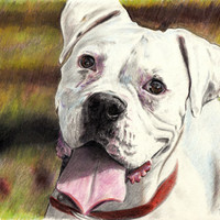 White Boxer - Color Pencil Dog Drawing A4 Size Limited Edition Print