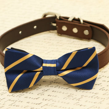 Navy dog bow tie attached to collar, pet wedding, Navy and gold wedding