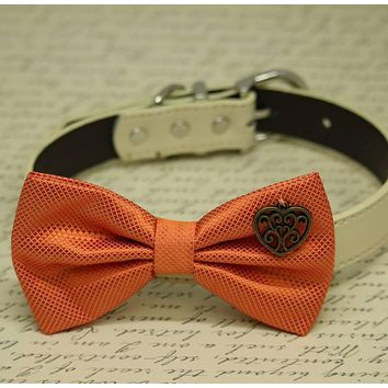 Orange Dog Bow tie collar, Heart, birthday gift, Pet wedding, dog lovers, one of the kind