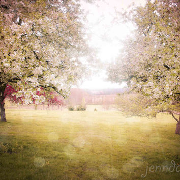 Lighter Than Air - fine art photograph, apple orchard photo, surreal spring landscape, pastel, nursery decor, apple trees