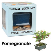 Eve's Pomegranate Bonsai Seed Kit Fruit-Bearing Complete Kit to Grow Pomegranate Bonsai from Seed