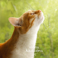 Rustic Red Сat Instant Digital Download Art Photograph Printable, rustic sunny cat, green and orange, animal photography