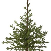 Martha Stewart Living™ Tabletop Fir Tree - Tabletop Christmas Tree - Small Christmas Trees | HomeDecorators.com