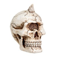 Cyclops Skull by Summit Collection (Bone)
