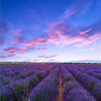 Custom sky lavender flowers field vinyl print photography backdrops for wedding model photo studio portrait backgrounds LA-001