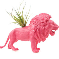Pink Lion planter with air plant GREAT GIFT for college, office, or desk decor