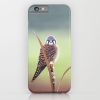 American Kestrel  iPhone & iPod Case by North Star Artwork