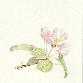 Blossom, Original Watercolor painting art still life spring aquarelle appletree nature garden