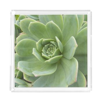 Hens and Chicks Plant Serving Tray