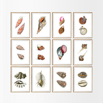 Sea Shell Art Print SET OF 12. A4 Size UNFRAMED seashells home decor, seashell art, sea shell art,sea shell decor, seashell prints, wall art