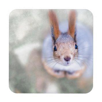 Squirrel looks at you from the bottom up coaster