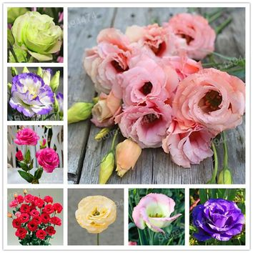 200pcs Rare mixed color Eustoma Seeds Perennial Flowering Plants Lisianthus seeds bonsai flower seeds for home garden