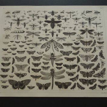 BUTTERFLY poster - original 165+ years old butterfly pictures - antique fauna print butterflies vintage pictures of moth insects moths
