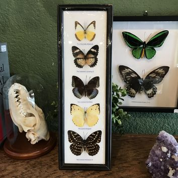 5 Ryker Mounted Butterflies