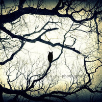 Owl Photo Print Mysterious Woods by SSCphotography