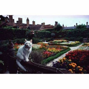 White cat is perched on a fence overlooking the gardens
