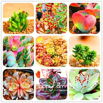 Time-Limit!!10pcs/Bag 99 Kinds to choose Lithops Seeds Succulents Seeds Pseudotruncatella Office Bonsai Flower Seeds,#JV471R