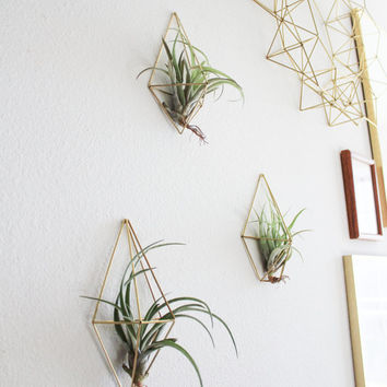 The Wall Sconce Trio Set B | 3 Brass Air Plant Holders, Modern Minimalist Geometric Ornament