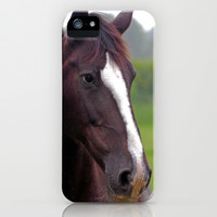Brown mare iPhone & iPod Case by Doug McRae