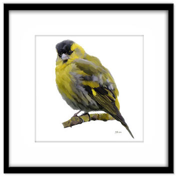 Siskin, Fine Art Instant Download, 8x8 inch, Country Garden Bird Art, British Birds, Finch, Green and Yellow