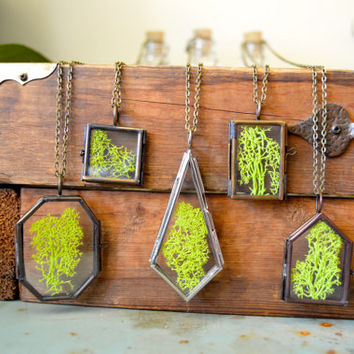 Real Moss Specimen Glass Locket Necklace
